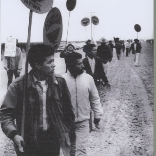 ROBERTO BUSTOS AND FREDDIE ARMENTA LOOKING FOR STRIKEBREAKERS TO TALK TO THEM OF JOINING THE STRIKE! CREWS WERE OFTEN MOVED WAY INSIDE THE MIDDLE OF FIELD SO THEY WON\'T HEAR OR SEE THE STRIKERS.